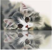 小猫在玻璃说谎 库存照片