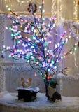 小猫坐在光圣诞树下  免版税库存图片
