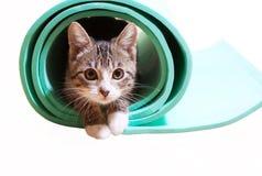 小猫坐在白色背景的瑜伽席子 免版税库存图片