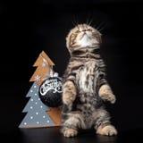 小猫坐它的后腿 图库摄影