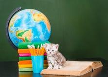 小猫坐开放书在空的绿色黑板附近 免版税库存图片