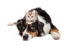 小猫坐耐心大狗 免版税库存照片