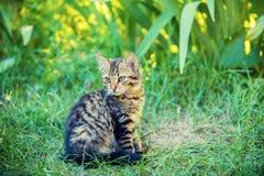 小猫坐草 免版税库存照片