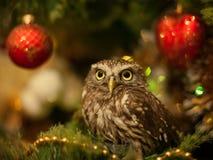 小猫头鹰坐圣诞树在圣诞节附近戏弄 免版税库存图片