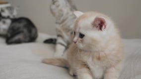 小猫室内家庭小组画象  股票视频
