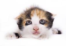 小猫惊吓了 免版税库存图片