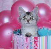 小猫惊奇 库存照片