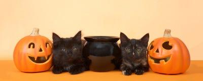 黑小猫愉快的万圣夜横幅格式 库存图片