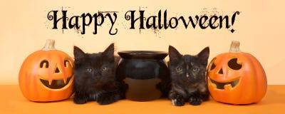 黑小猫愉快的万圣夜横幅格式 免版税库存照片