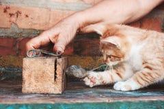 小猫抓住老鼠 免版税库存图片