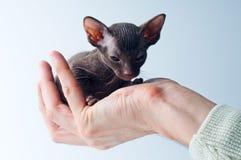 小猫掌上型计算机 免版税库存照片
