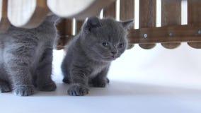 小猫掩藏 股票录像