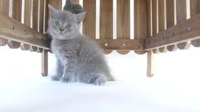 小猫掩藏 股票视频