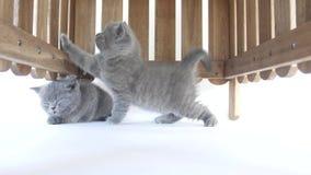 小猫掩藏 影视素材