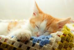 小猫摇摆了他的脚和睡眠 库存图片