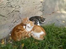 小猫放松 免版税库存图片