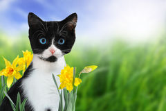 小猫春天 库存照片