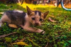 小猫暗中侦察 库存图片