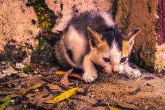 小猫暗中侦察 免版税库存照片