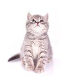 小猫有来历小 库存照片