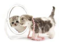小猫查找镜子 免版税库存照片