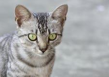 小猫特写镜头 免版税库存照片
