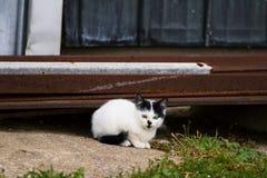 小猫由钢谷仓墙壁休息,等待老鼠! 库存图片