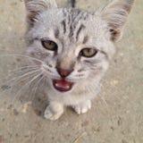 小猫的视域 库存照片
