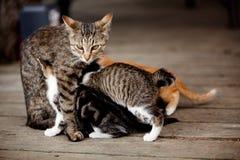 小猫看护 库存图片