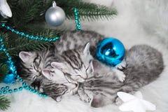 小猫睡眠在树下 圣诞节新年度 免版税库存照片