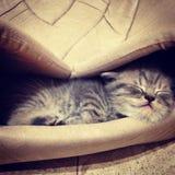 小猫睡觉 库存照片