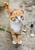 小猫红色 免版税库存照片