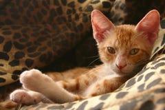小猫红色 免版税图库摄影