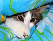 小猫耳朵,颊须,桃红色鼻子嬉戏的神色  免版税库存照片