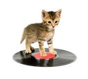小猫记录身分 库存图片