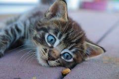 小猫诱惑 库存照片