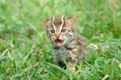 小猫豹子 库存照片