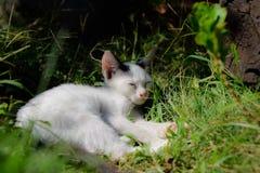 小猫路运行白色 免版税库存图片