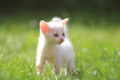 小猫路运行白色 免版税图库摄影