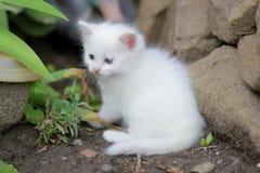 小猫路运行白色 库存图片