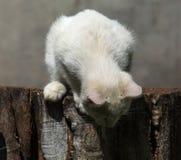 小猫路运行白色 库存照片