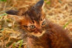 小猫迷路者 库存图片