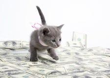 小猫销售额 库存照片