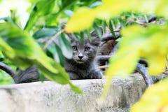 小猫面孔关闭画象 库存图片