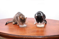 小猫饮用奶 图库摄影