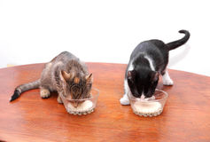 小猫饮用奶 免版税图库摄影