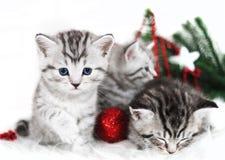 小猫,圣诞节假日,红色圣诞节球戏弄 免版税图库摄影