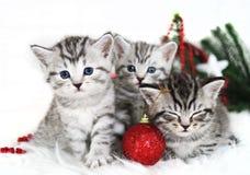 小猫,圣诞节假日,红色圣诞节球戏弄 免版税库存照片