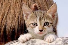 小猫 画象 照亮 头发 浅黑肤色的男人 免版税库存照片