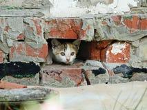 小猫 砖墙 库存照片